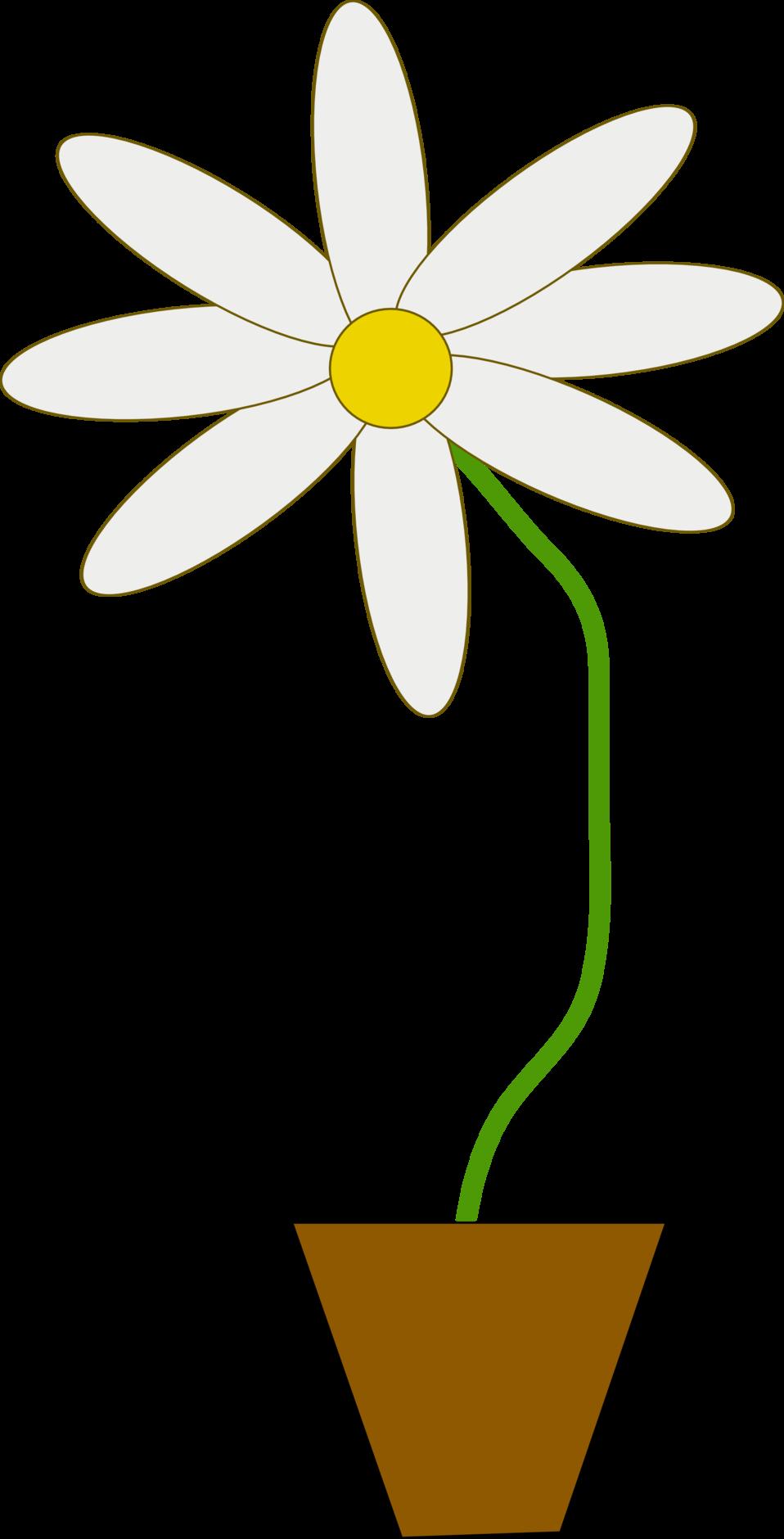 flower in a pot