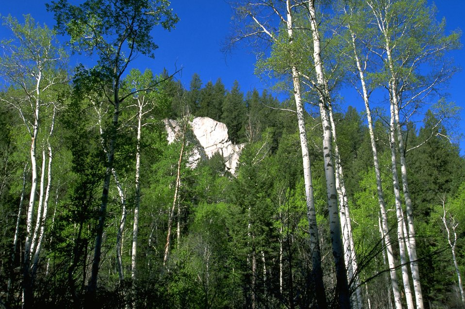 Rock formation surrounded by Aspen