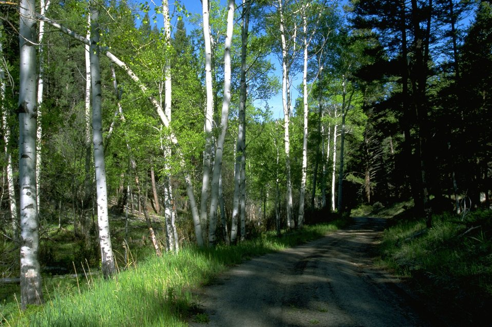 MacLean Road in the shade of Aspen and fir trees