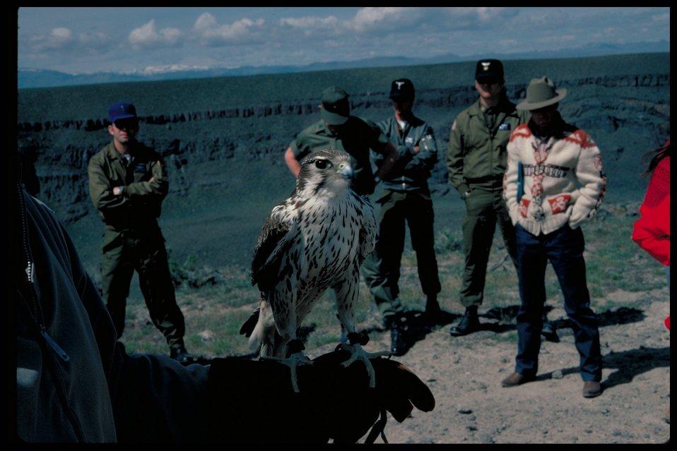 Prarie Falcon  Birds of Prey National Conservation Area  BOP  Owyhee Field Office  LSRD  Lower Snake River District