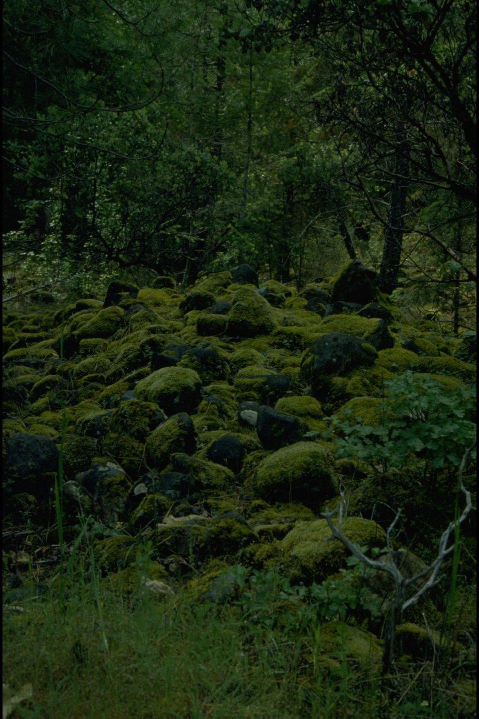 Mossy rocks in a creek bed.