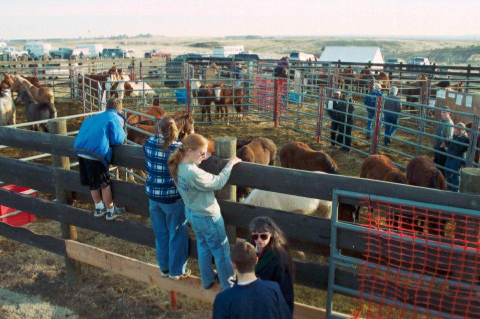 Wild Horse and Burro Adoption