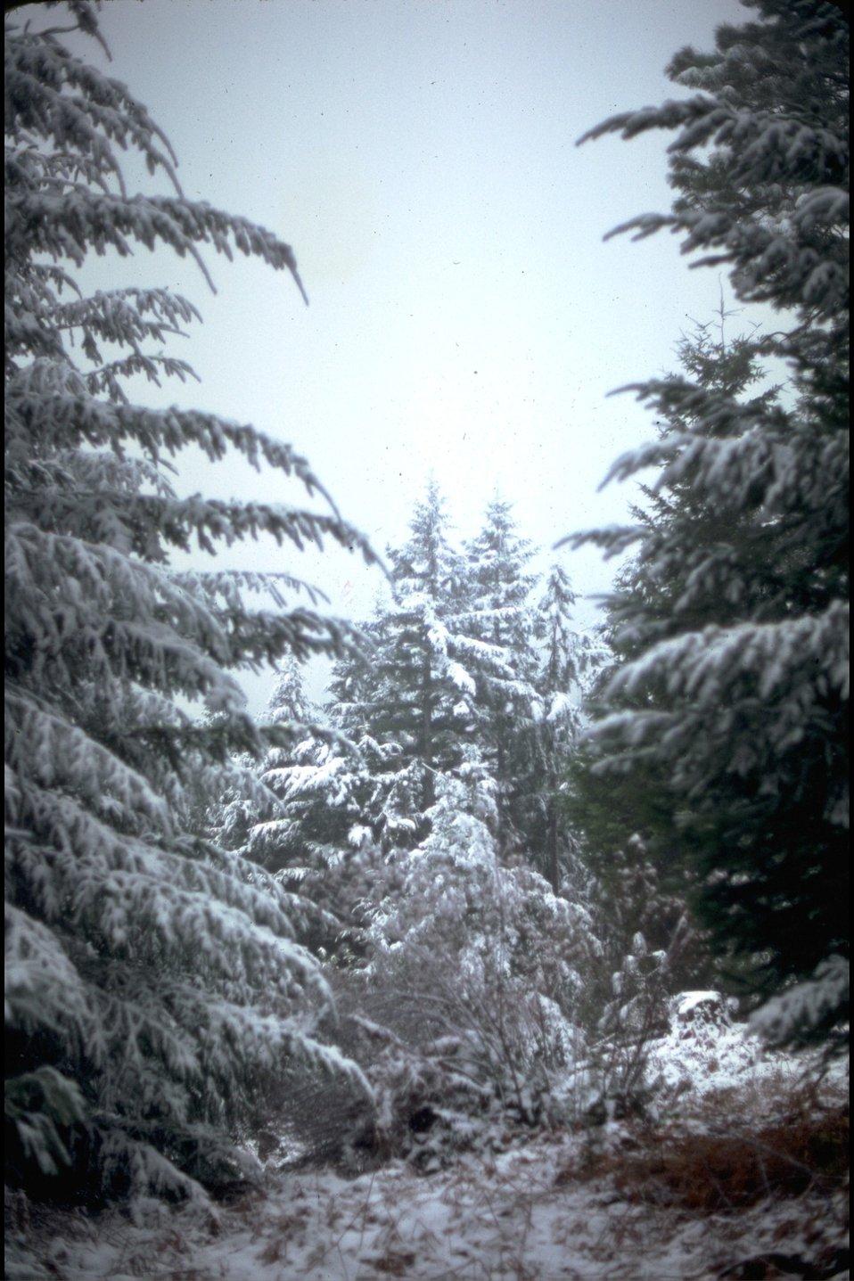 Wild Rogue River shuttle route, snow on Bald Ridge.