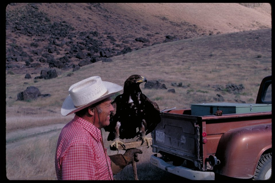 Man with eagle  Birds of Prey National Conservation Area  BOP  Owyhee Field Office  LSRD  Lower Snake River District