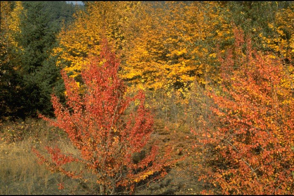 Rogue River, Fall Colors.