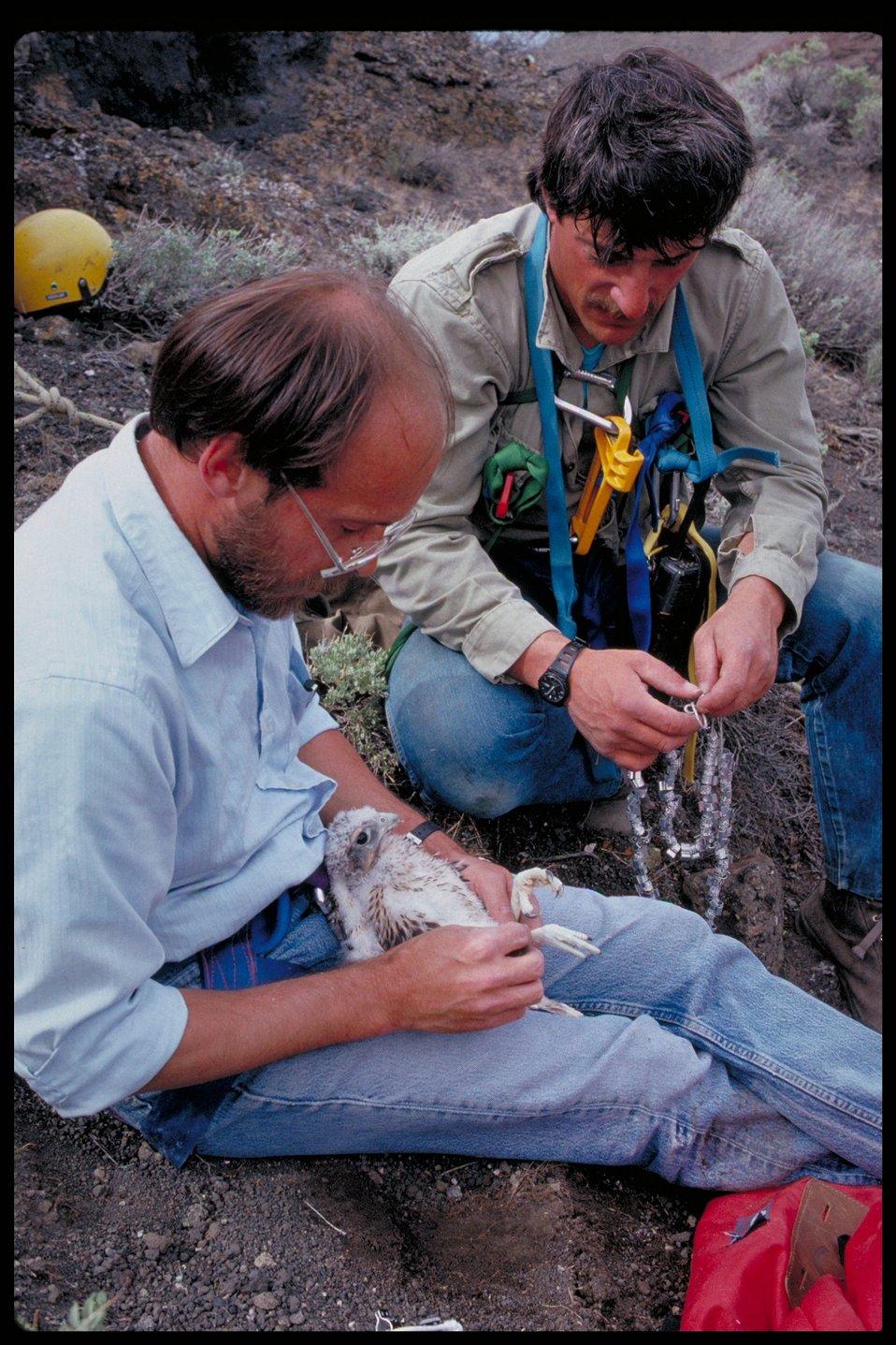 Research  Birds of Prey National Conservation Area  BOP  Owyhee Field Office  LSRD  Lower Snake River District
