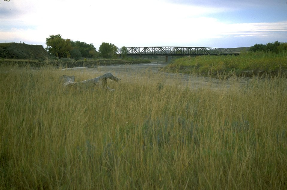 Tall grass along Powder River with train bridge in the background