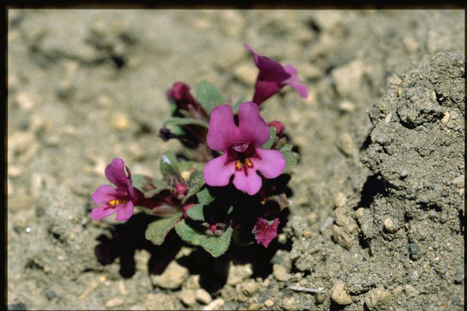 Medium shot of violet habitat.