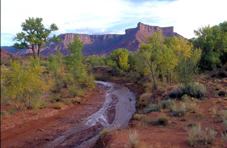 Mary Jane Canyon, Professor Creek with Adobe Mesa in background near Highway 128 near Moab, Utah.