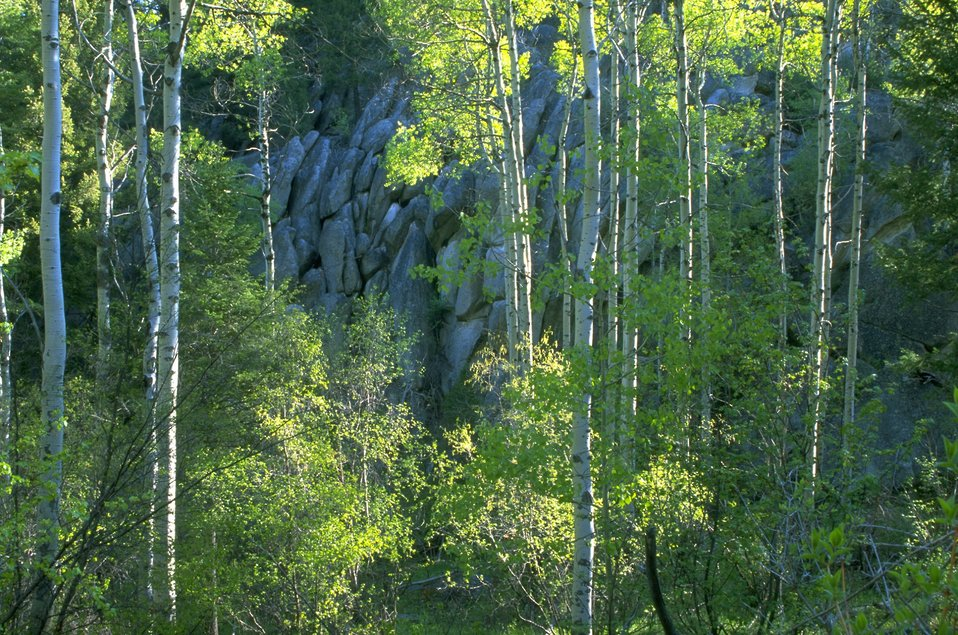 Rock formations and Aspen trees