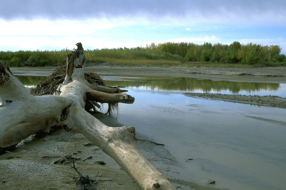 Dead wood on the banks of the Powder River