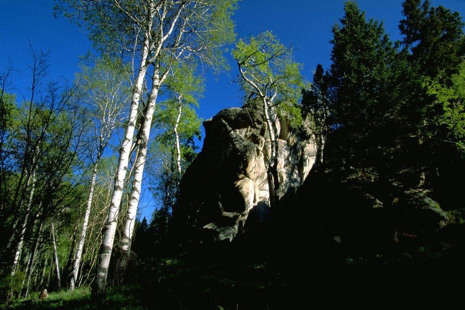 Aspen and Rocks