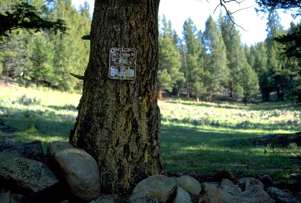 Regulation Sign destroyed by bullet holes on tree trunk