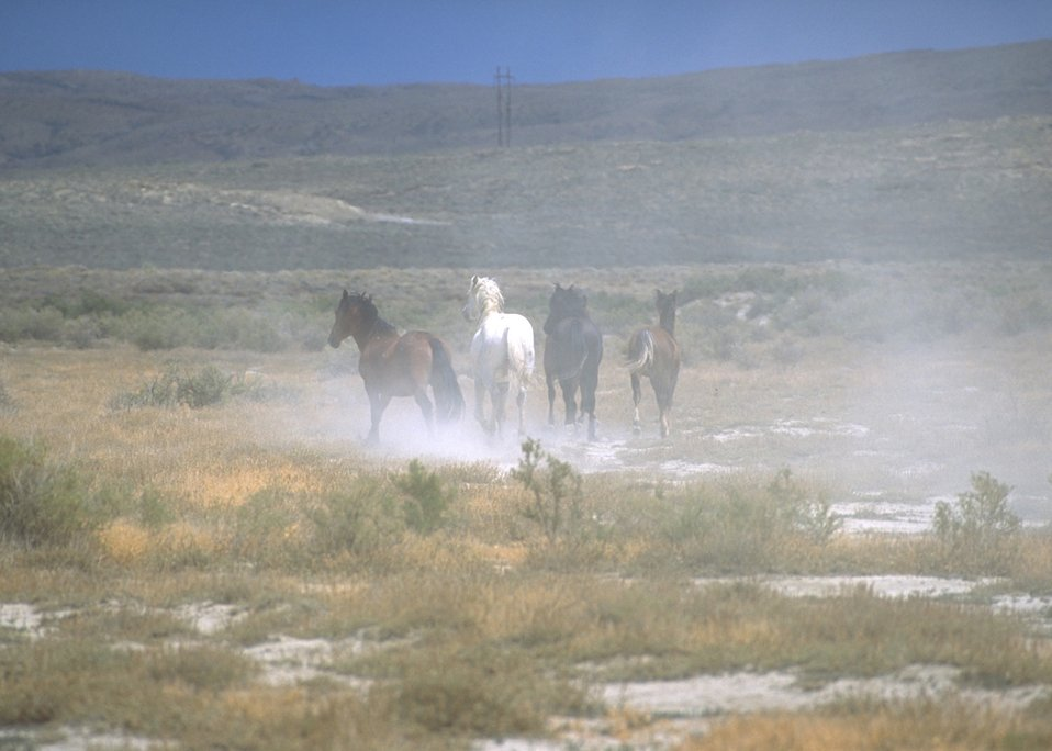 Wild horses, Rock Springs Field Office.