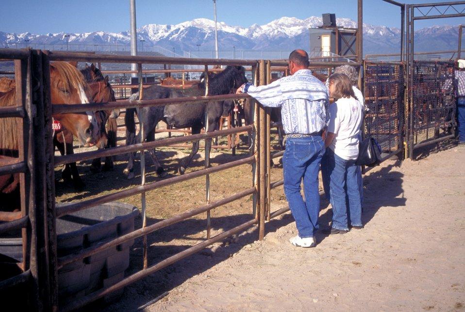 Utah Annual Wild Horse Festival.