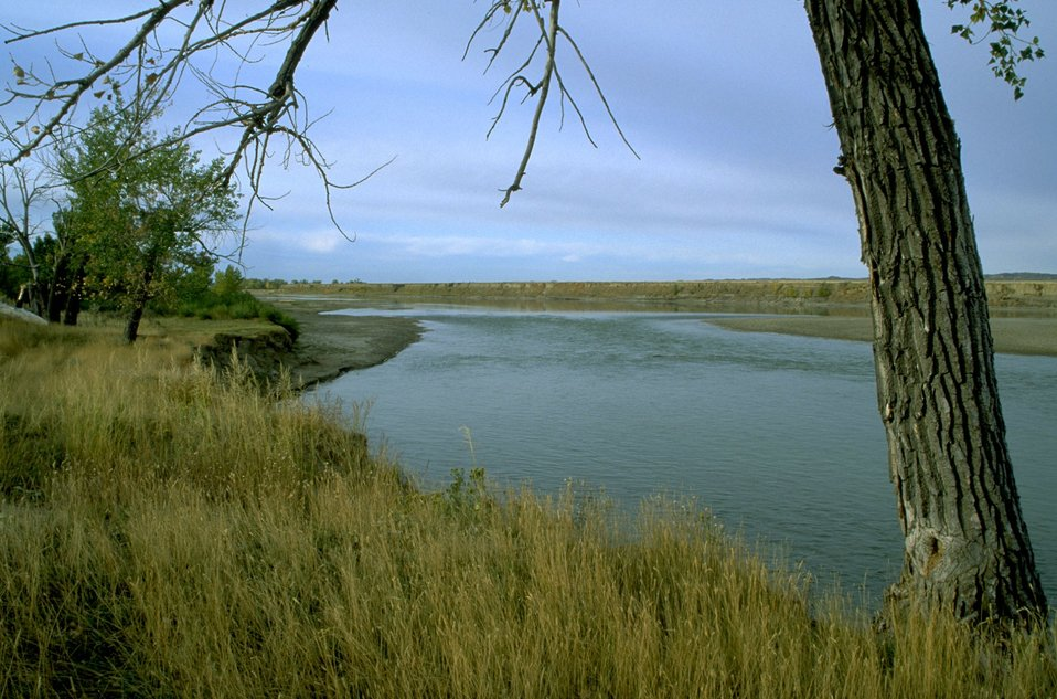 Grass and trees along the Yellowstone River