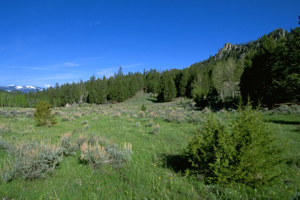 Sagebrush and trees in a meadow with snowy mountain in the background