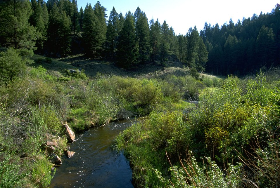 Moose  Creek flowing among the foliage in the Humbug Spires Wilderness Study Area