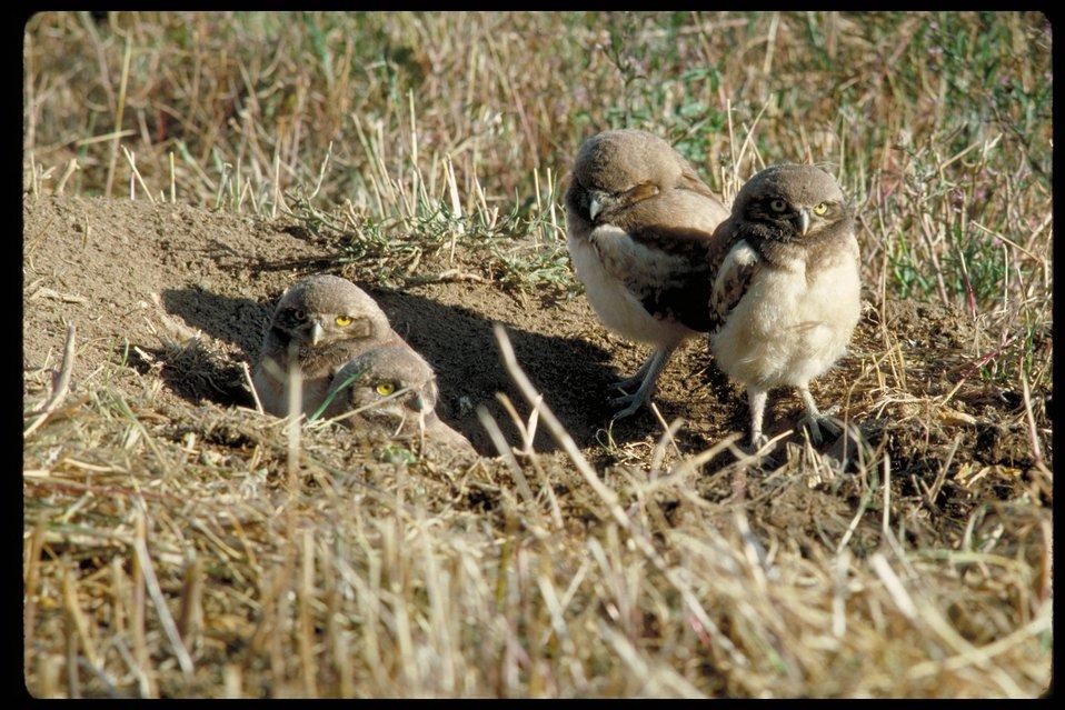 Birds of Prey National Conservation Area  BOP  Owyhee Field Office  LSRD  Lower Snake River District