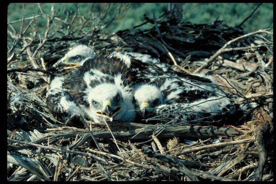 Slater's Flat  Birds of Prey National Conservation Area  BOP  Owyhee Field Office  LSRD  Lower Snake River District