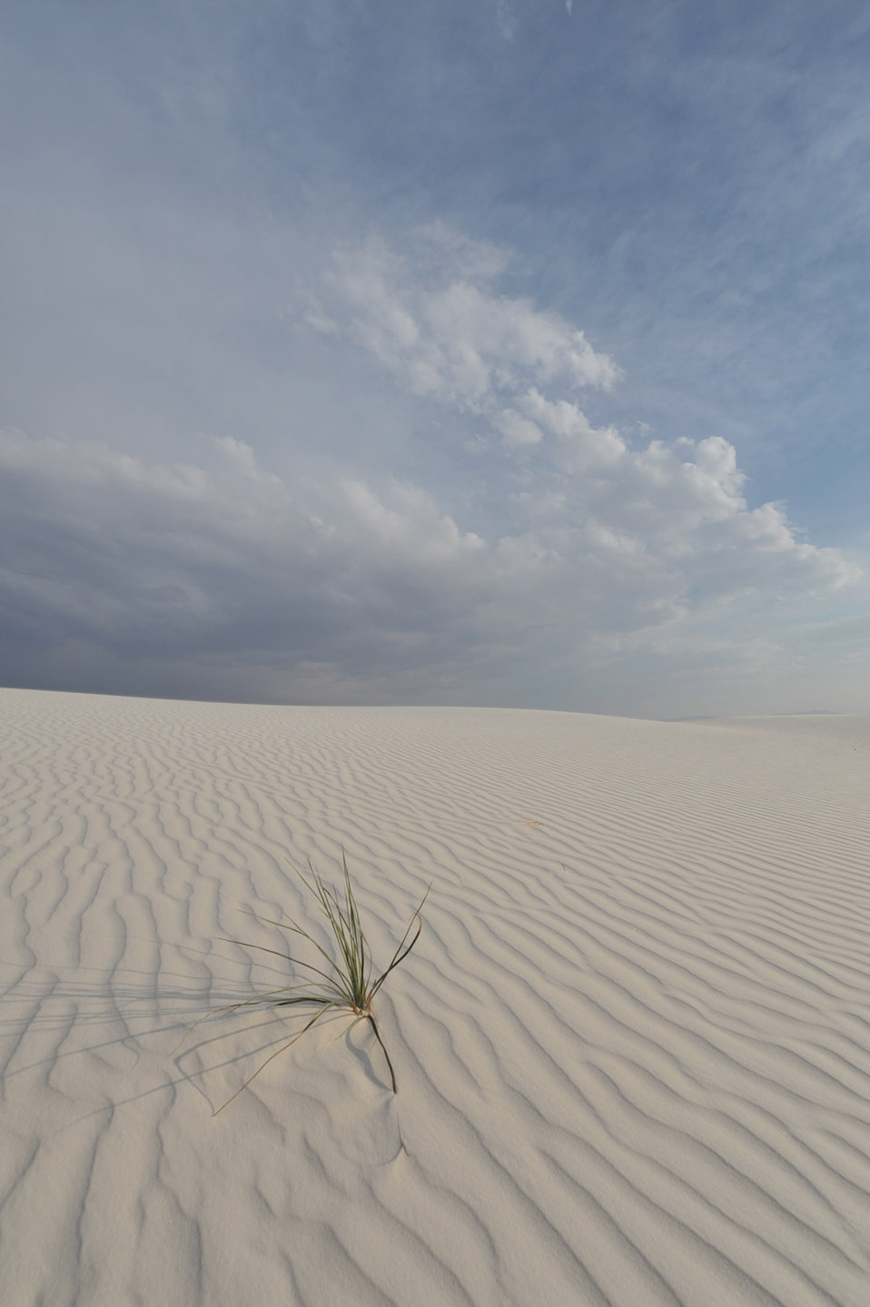 The grass of white sands 4