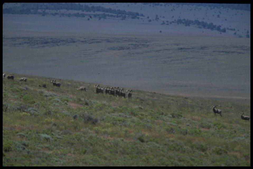 Far shot of sheep, Lakeview District.