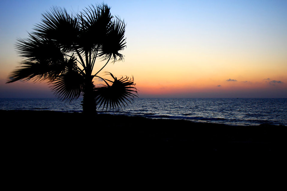 Palm tree and sea at sunset