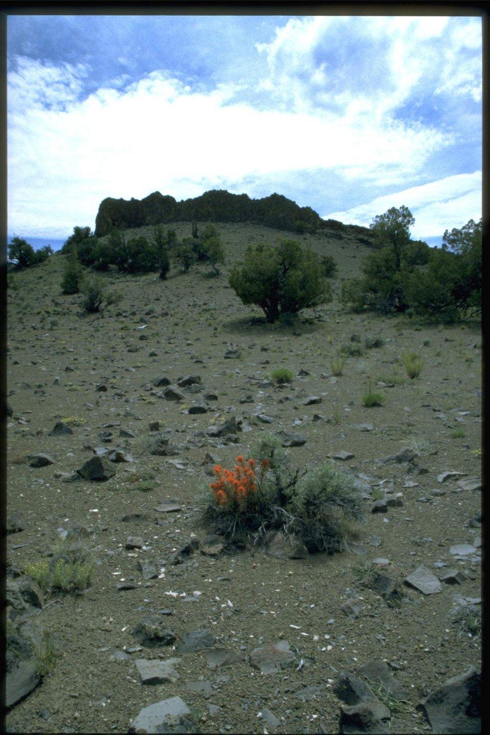 Farshot of Indian Paintbrush habitat.