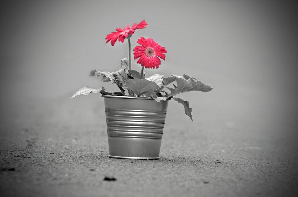 Red flower - light effect
