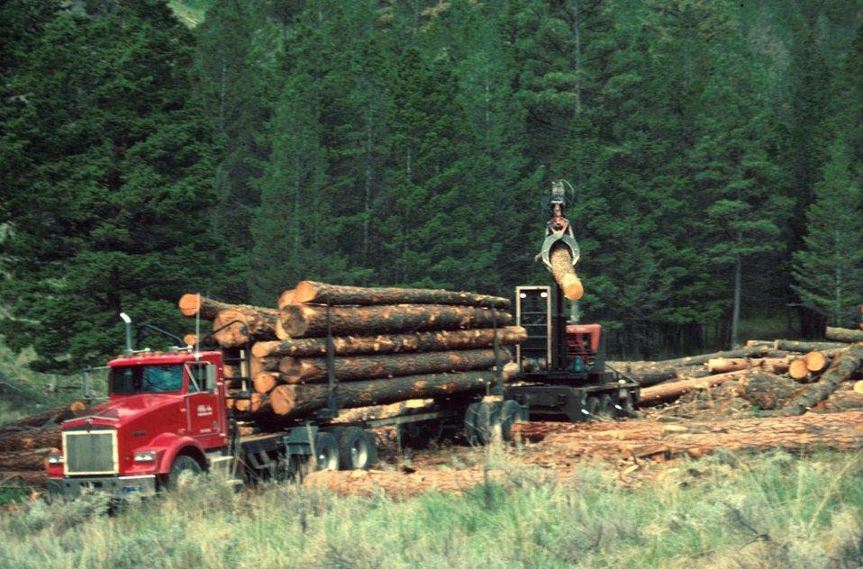 Image result for logging