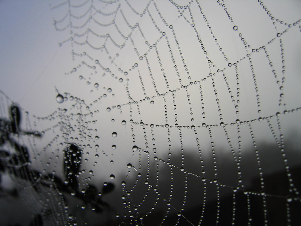 Morning web