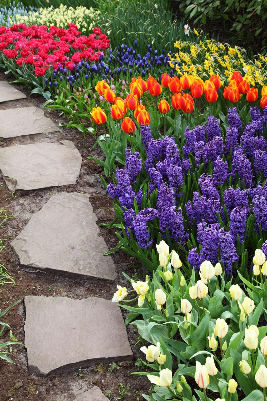 Луковичные цветы для клумбы фото и названия
