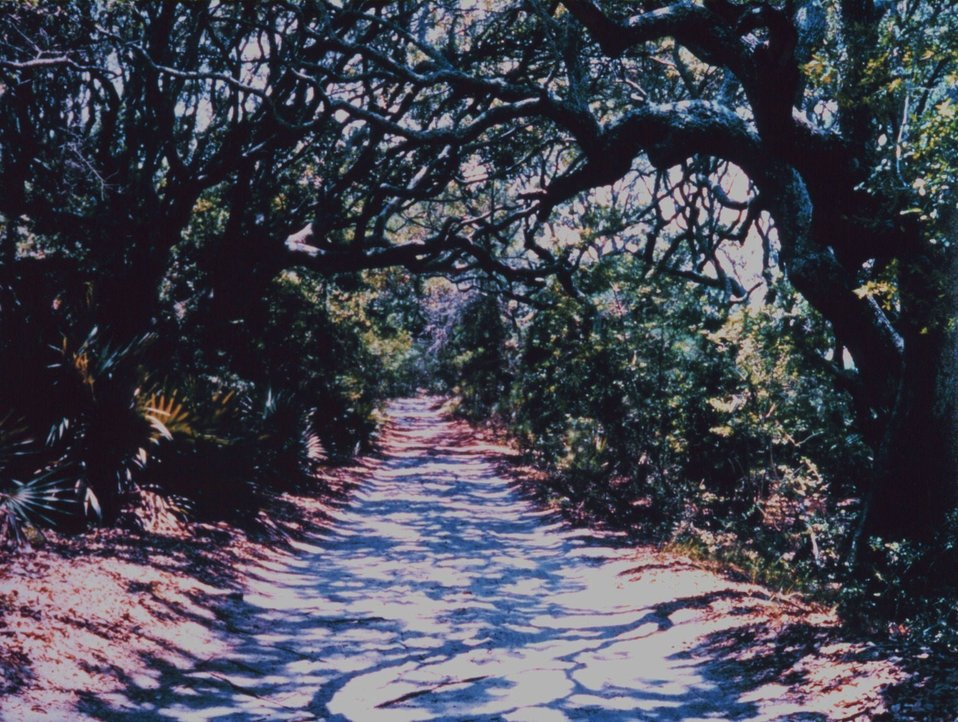 A road through the live oak forest on Cabretta.  The shadows weave a wonderful texture on the road surface.