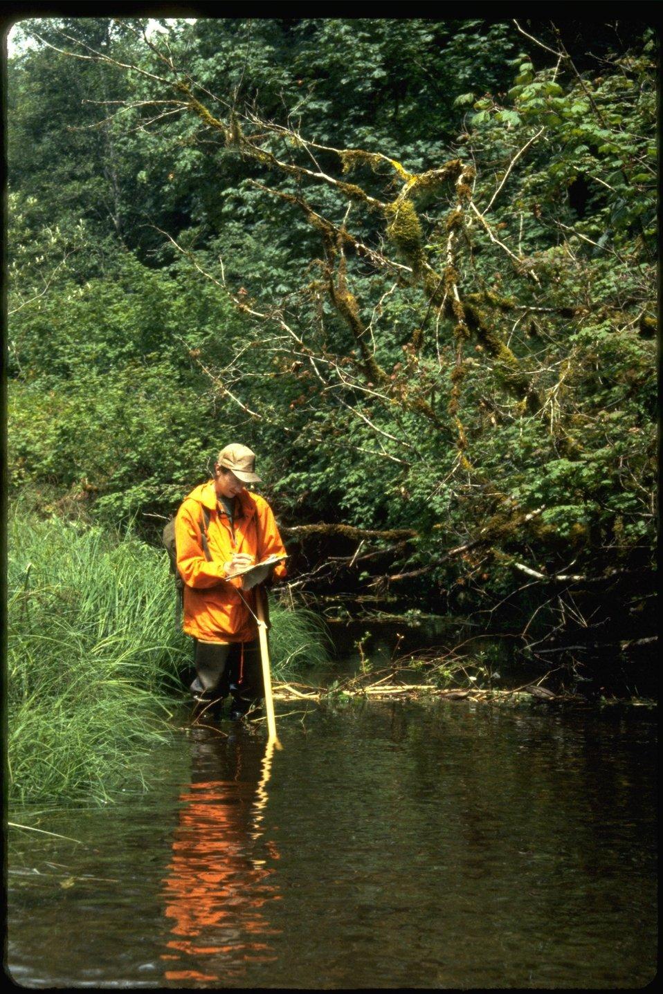 Russ surveying Smith Creek during habitat study.