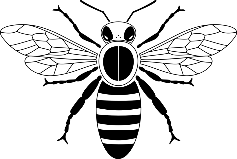 Simple bee from above