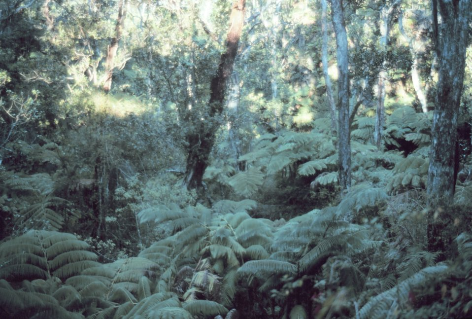 A nature trail near Thurston Lava Tube