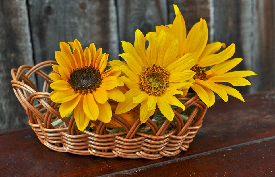Baskets of flowers sunflower