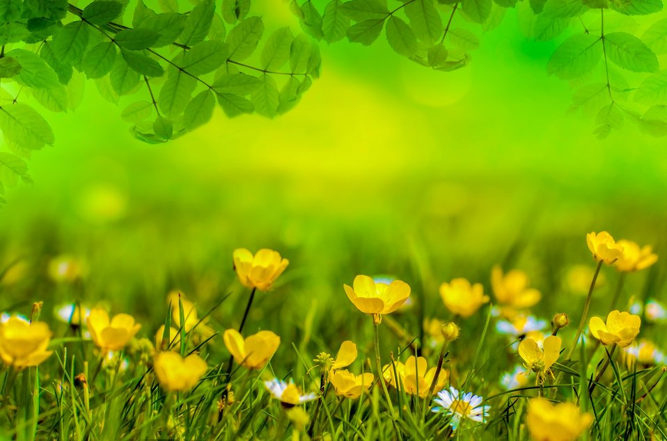 Natural backgrounds with flowers