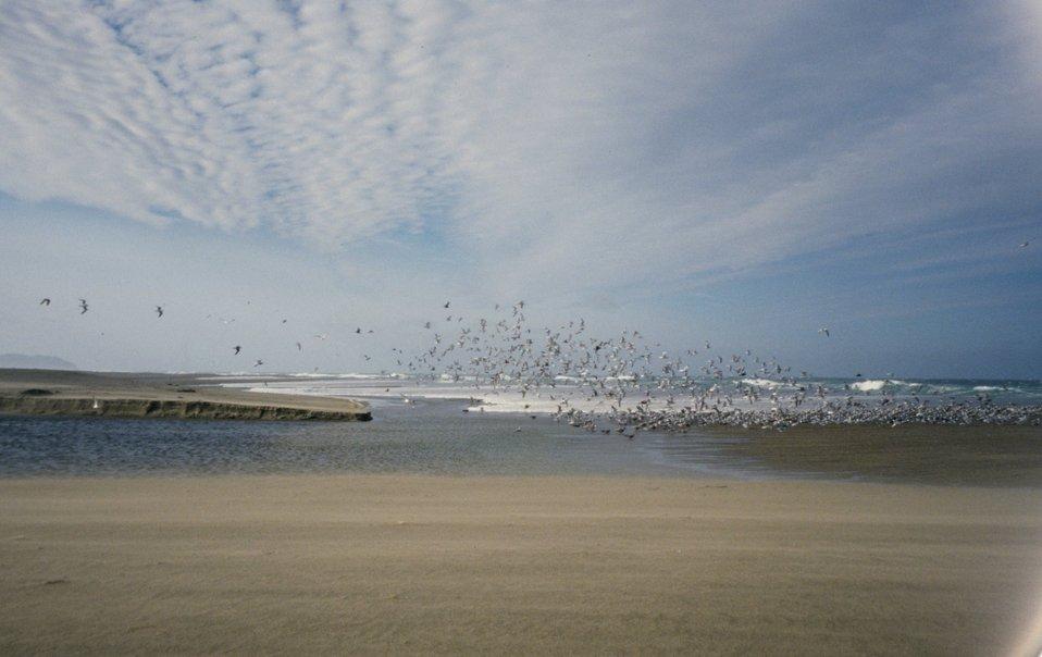 Point Reyes Great Beach
